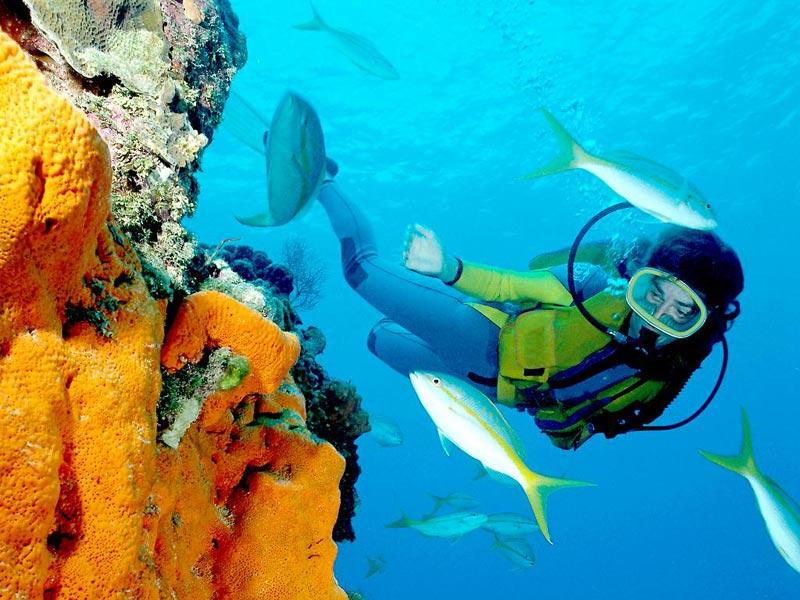 scuba diving in hawaii #1